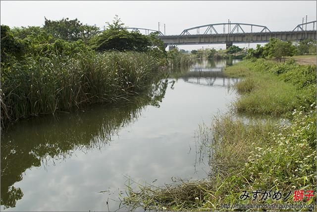 高雄舊鐵橋溼地公園_17.jpg