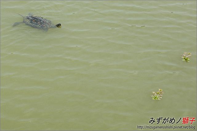 高雄金獅湖_5