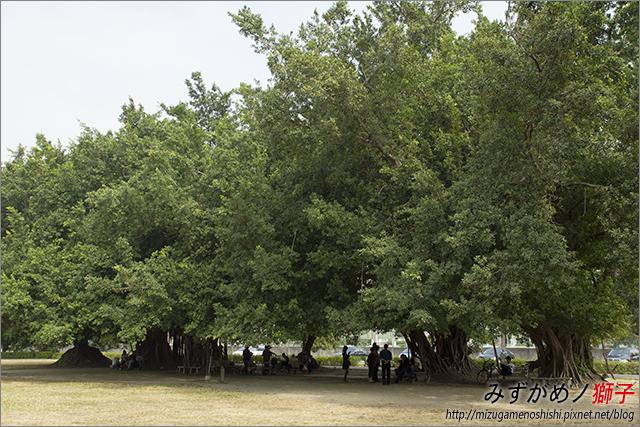 高雄衛武營都會公園_7