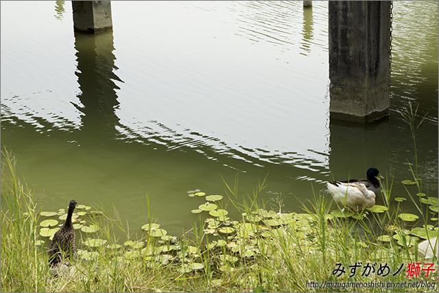 高雄衛武營都會公園_13