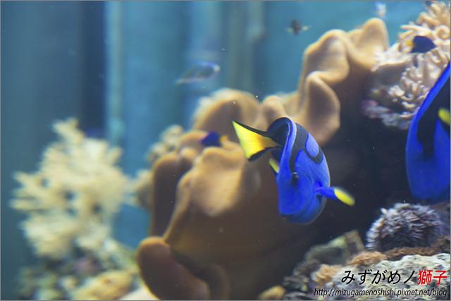 屏東海洋生物博物館_9