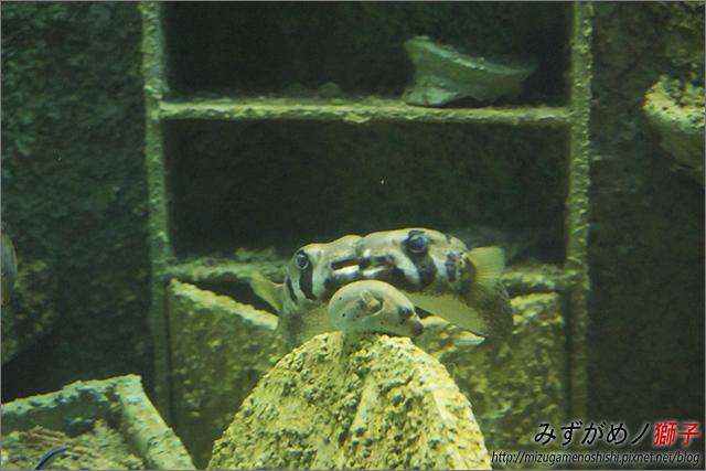 屏東海洋生物博物館_32