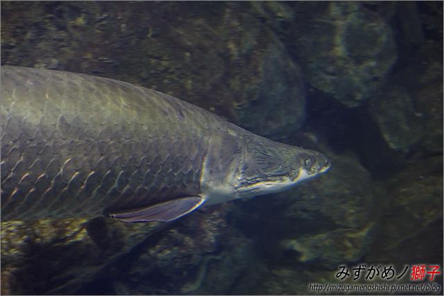屏東海洋生物博物館_42