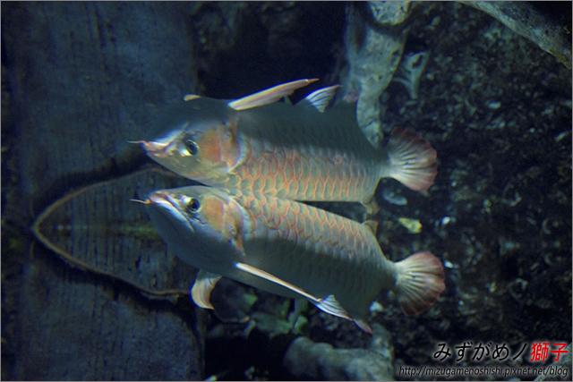 屏東海洋生物博物館_43