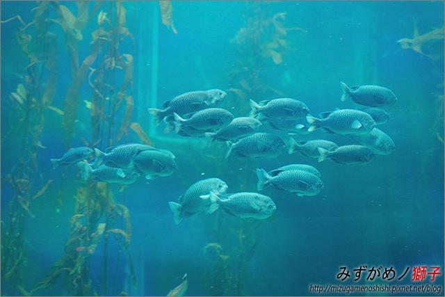 屏東海洋生物博物館_47