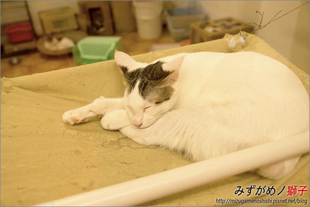 貓吐司_9