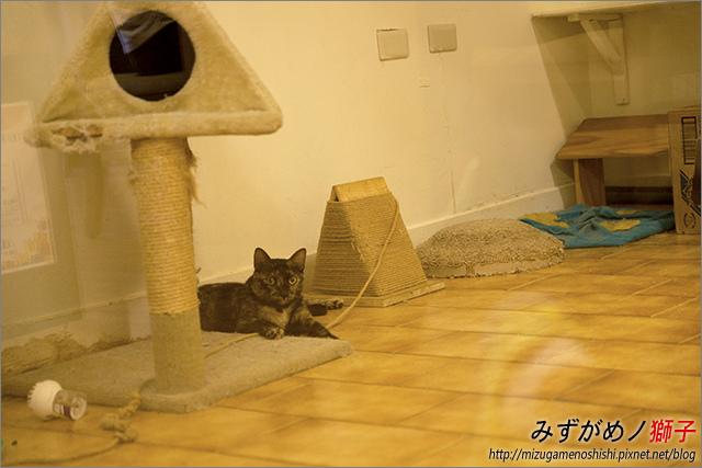貓吐司_10