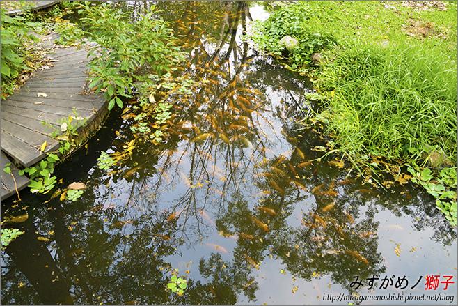高雄大東公園_12.jpg