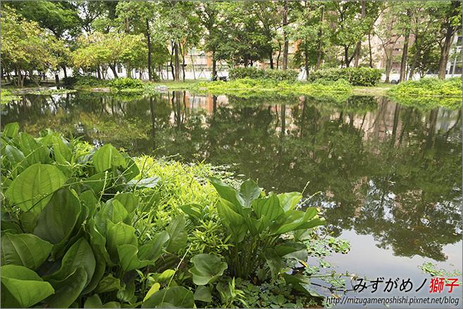 高雄大東公園_16.jpg
