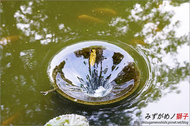 高雄大東公園_22.jpg