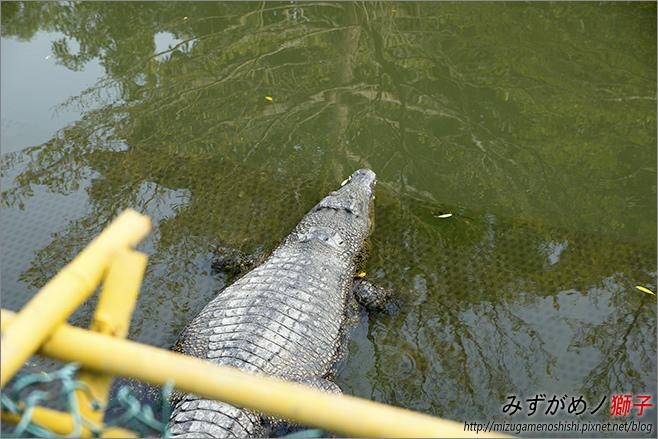 不一樣鱷魚生態農場_17.jpg