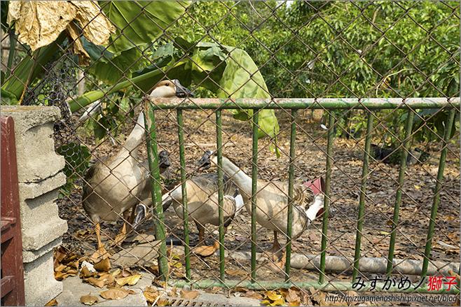 不一樣鱷魚生態農場_14.jpg