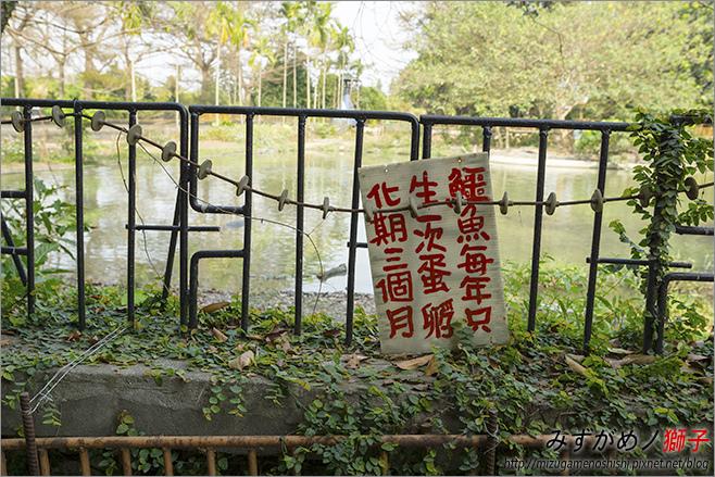 不一樣鱷魚生態農場_16.jpg