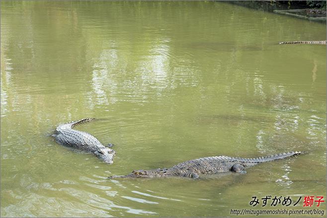 不一樣鱷魚生態農場_18.jpg