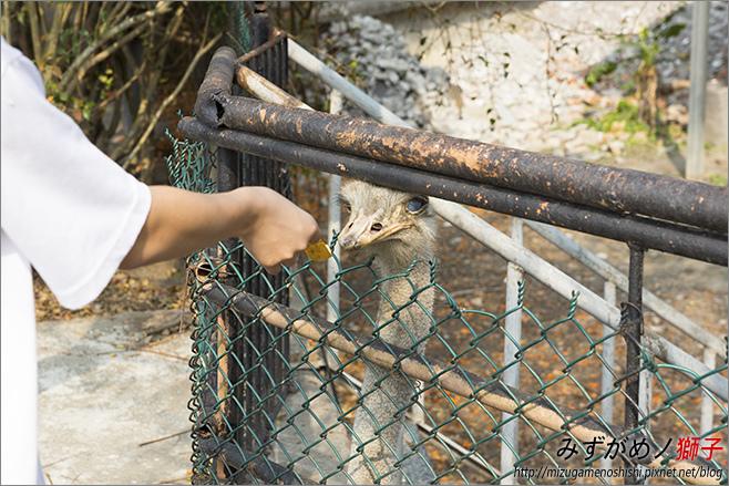 不一樣鱷魚生態農場_13.jpg
