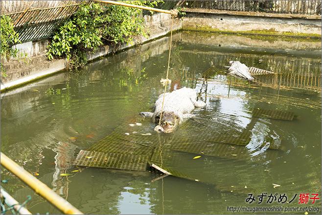 不一樣鱷魚生態農場_20.jpg