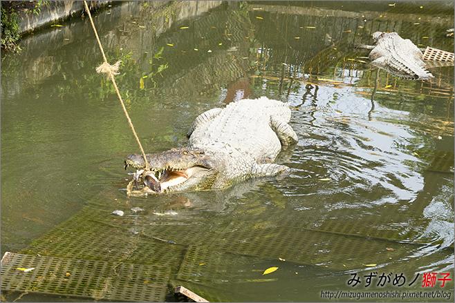 不一樣鱷魚生態農場_21.jpg