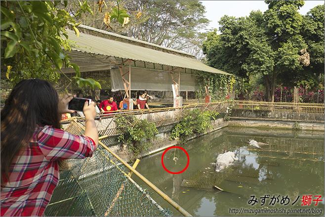不一樣鱷魚生態農場_19.jpg