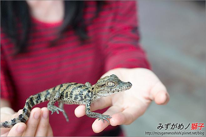 不一樣鱷魚生態農場_30.jpg