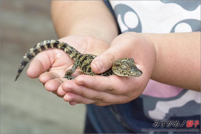 不一樣鱷魚生態農場_29.jpg