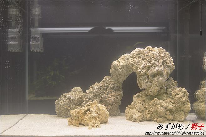 海水缸養水_6.jpg