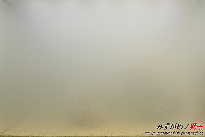 海水缸養水_12.jpg
