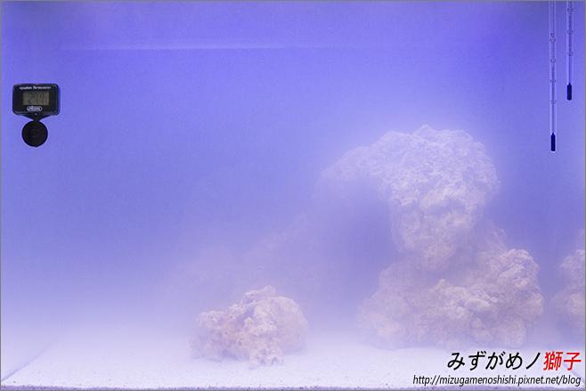 海水缸養水_13.jpg