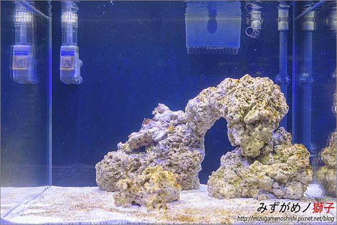 海水缸養水_17.jpg