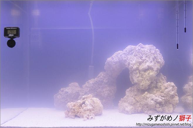 海水缸養水_14.jpg