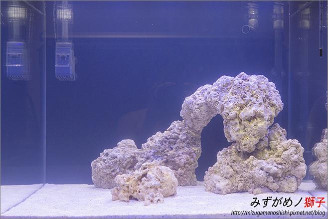 海水缸養水_15.jpg