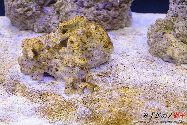 海水缸養水_19.jpg