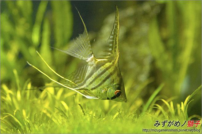 屏東農科園區觀賞水族動物展示中心_13.jpg