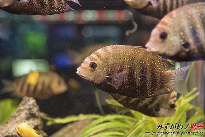 屏東農科園區觀賞水族動物展示中心_17.jpg