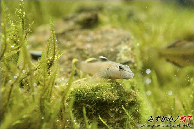 屏東農科園區觀賞水族動物展示中心_20.jpg