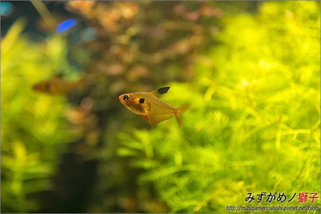 屏東農科園區觀賞水族動物展示中心_24.jpg