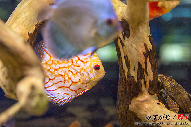 屏東農科園區觀賞水族動物展示中心_25.jpg