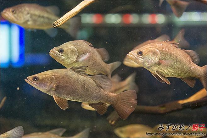屏東農科園區觀賞水族動物展示中心_37.jpg