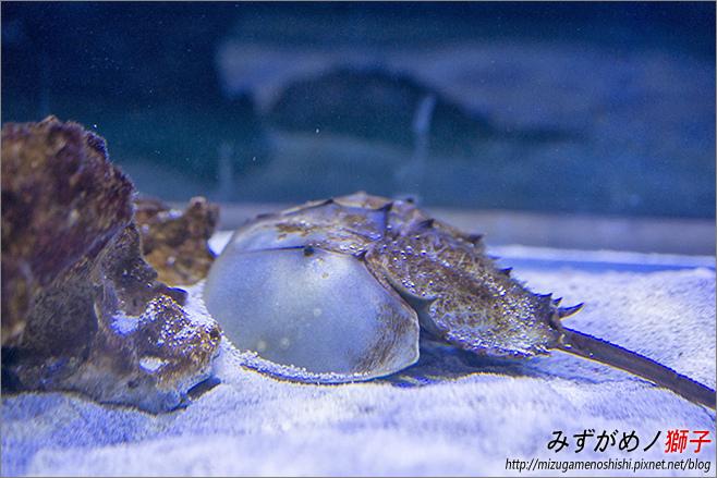 屏東農科園區觀賞水族動物展示中心_44.jpg