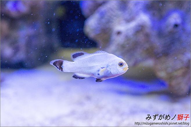 屏東農科園區觀賞水族動物展示中心_70.jpg