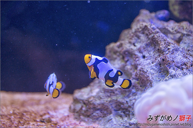 屏東農科園區觀賞水族動物展示中心_71.jpg
