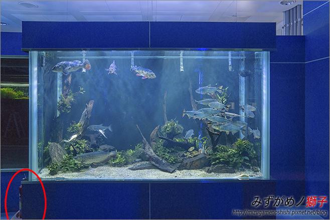 屏東農科園區觀賞水族動物展示中心_74.jpg