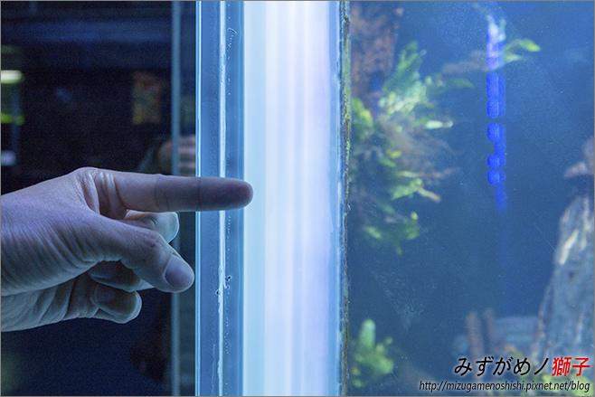 屏東農科園區觀賞水族動物展示中心_75.jpg