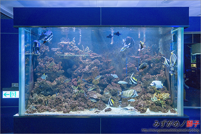 屏東農科園區觀賞水族動物展示中心_76.jpg