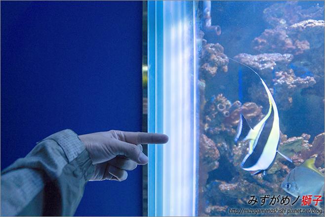 屏東農科園區觀賞水族動物展示中心_77.jpg
