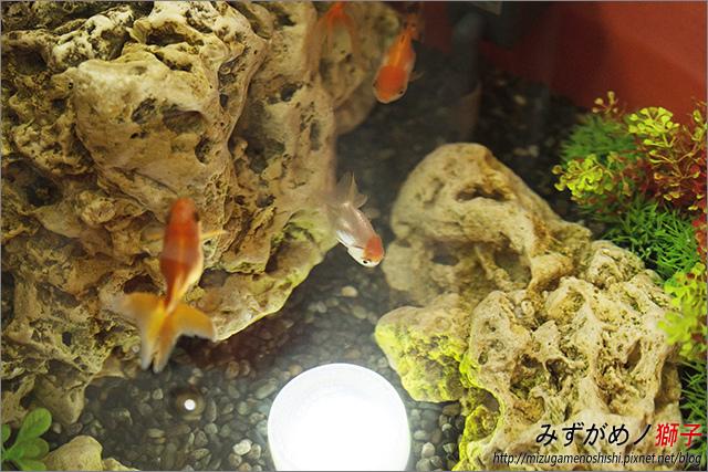 金魚保母_3.jpg