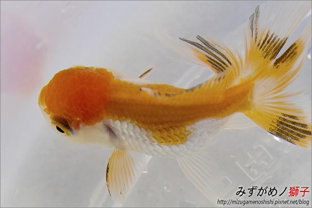金魚保母_12.jpg