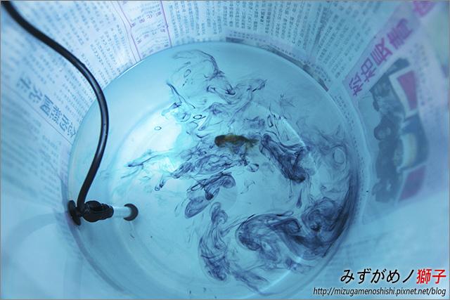 金魚保母_16.jpg