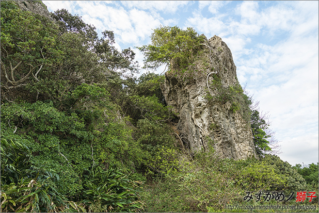 社頂自然公園_1.jpg
