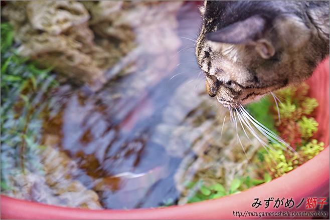 金魚保母_36.jpg