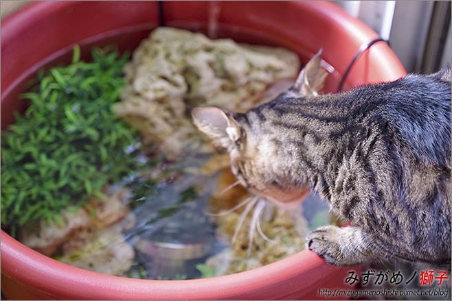 金魚保母_35.jpg